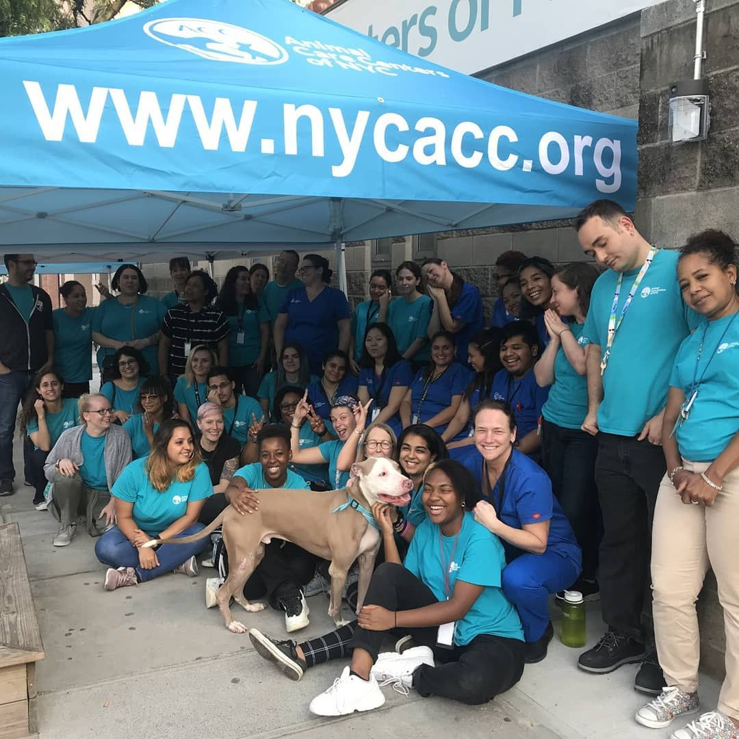Animal Care Centers Of Nyc On Instagram Manhattan Acc Staff And Volunteers Celebrated A Successful Cleartheshelters After Adoption Pet Care Nyc Acc Adoption