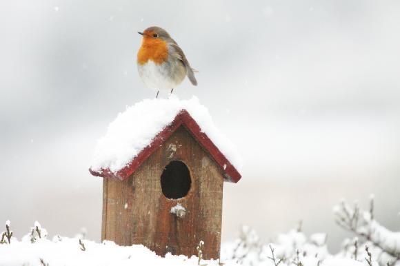 Cute Little Robin Red T