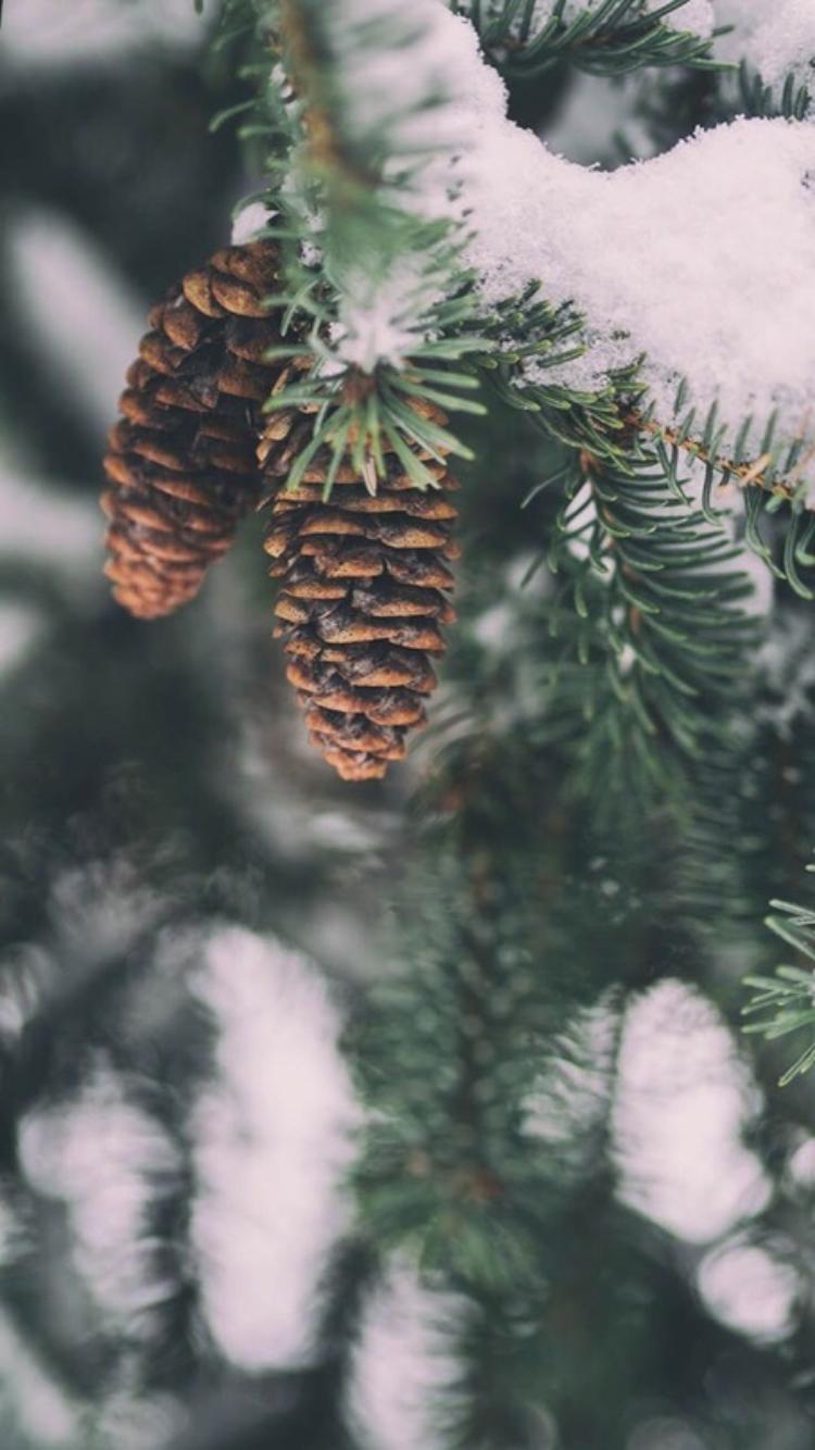 Pin von Victoria auf Обои Wallpaper winter, Winter