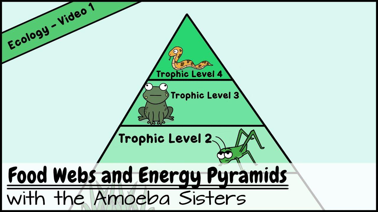 Food Webs And Energy Pyramids Bedrocks Of Biodiversity Energy Pyramid Food Web Trophic Level
