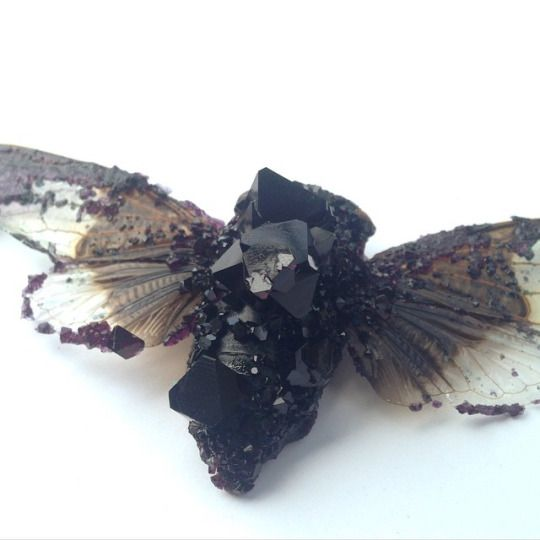 crystalized cicada  HOW? It's body never properly decomposed