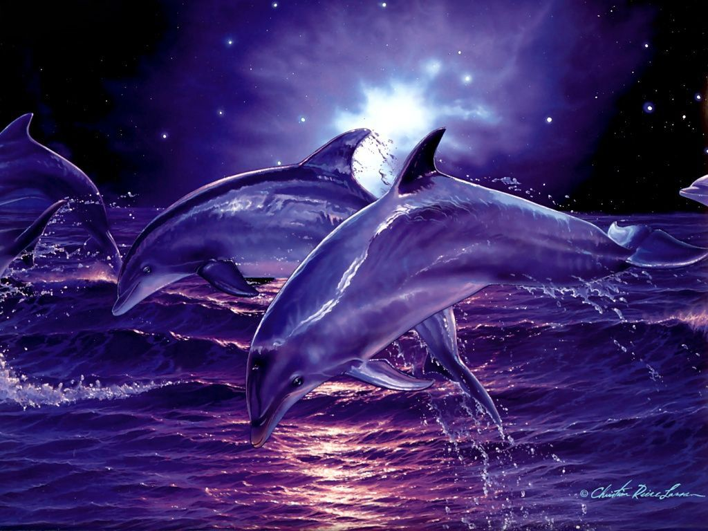 Free 3d Desktop Wallpaper Screensavers Wallpapers Wallpaper Desktop High Definition Wallpapers Free Dolphin Images Dolphins Dolphin Art