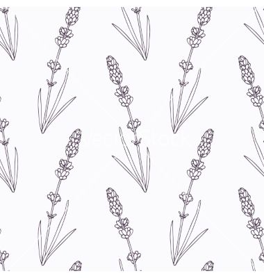 Hand Drawn Lavender Branch And Flowers Outline Vector Image On