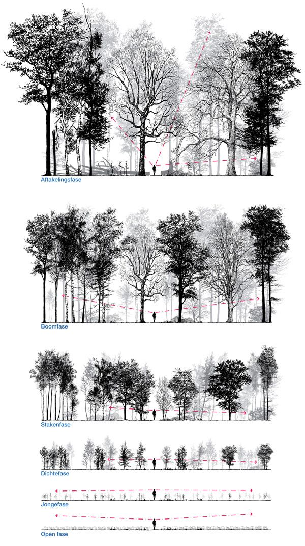 Patrick Ruijzenaars In Imagining And Designing Forest Is