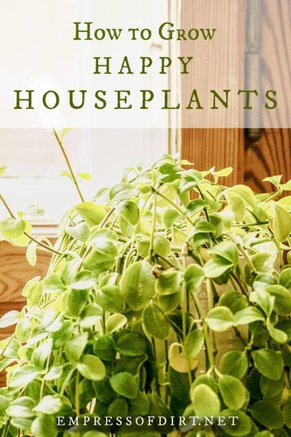 21 home garden houseplant
