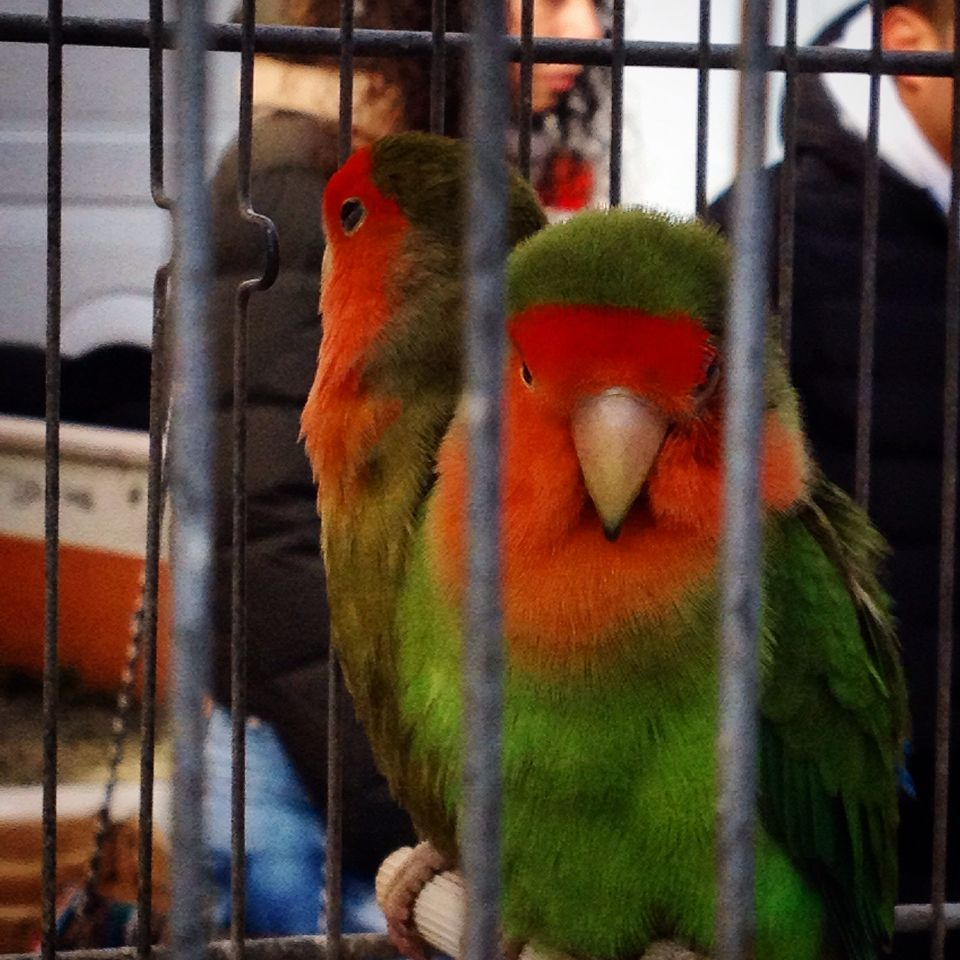 Let me free! #birds #colorful #cage #animal #portrait #street #street_style #freedom #free #fly #beautiful #lovely #orange #green #eyes #deep_eyes #angry_bird #love_birds #bird_in_cage