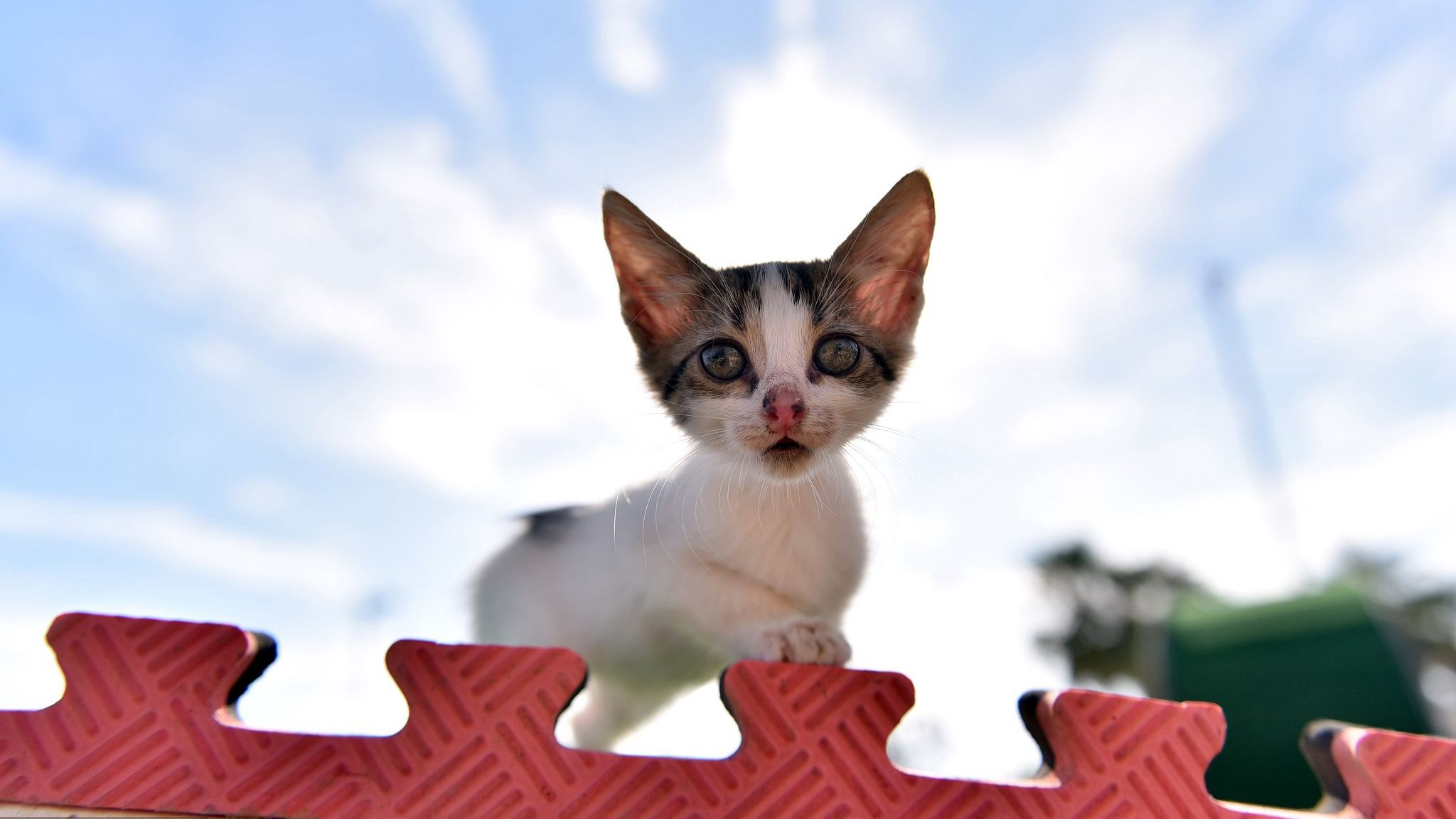 Welcome To The Meow Park A Cat Paradise In Turkey Located In Mersin The Park Is Built By The City Government For Those S Animal Stories Cute Animals Animals