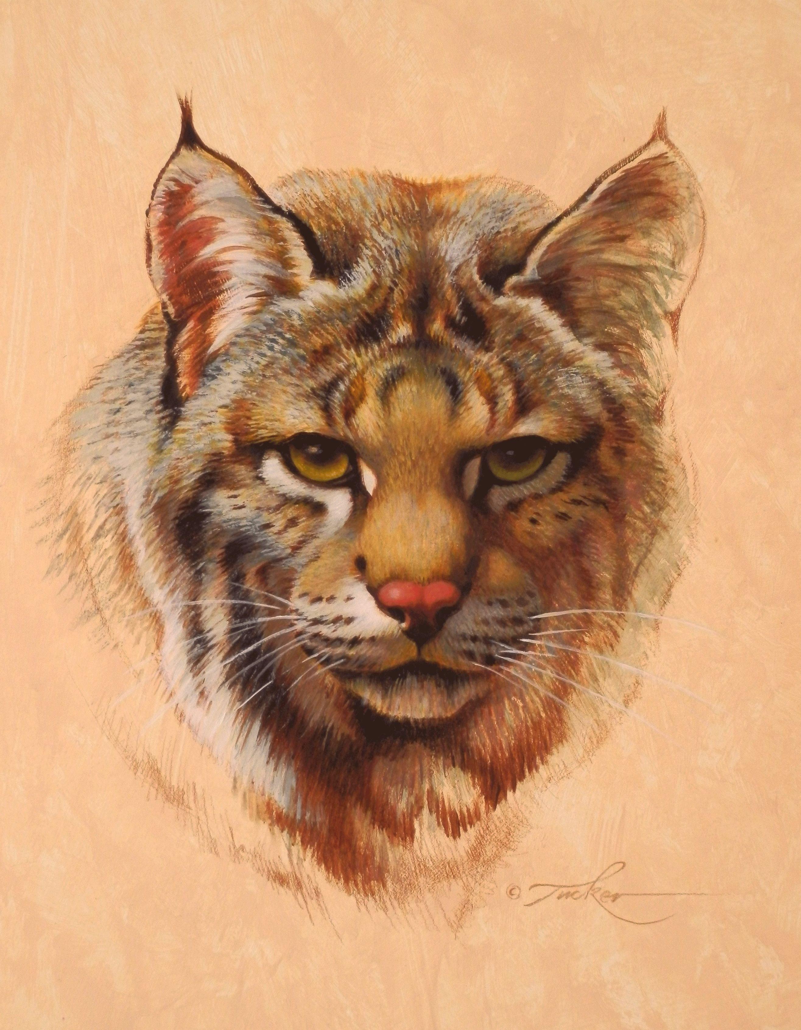 большие животные картинки рисунки увеличить