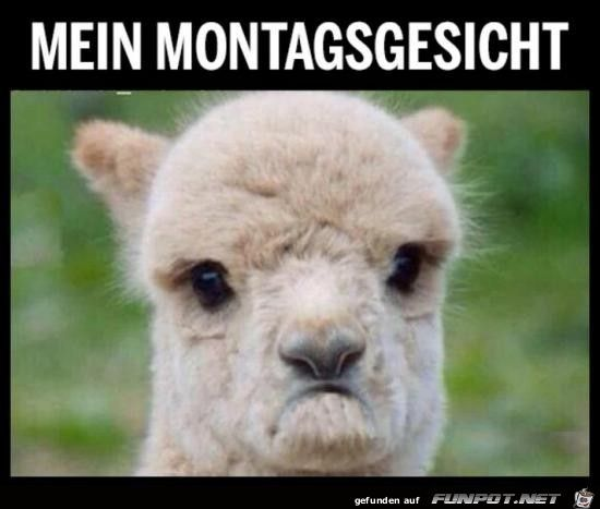 Mein Montagsgesicht Alpaka Lustig Susseste Haustiere Susses Lama