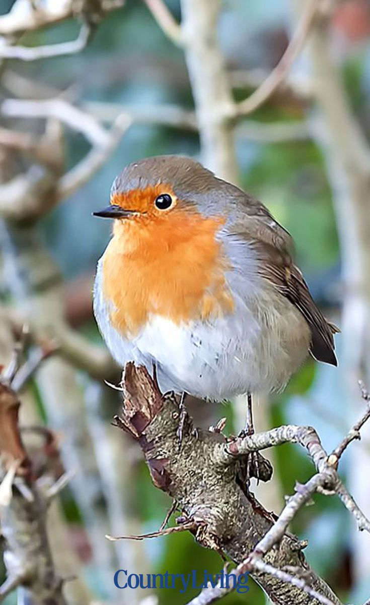 There's nothing better than watching an array of wildlife enjoying the garden as much as we do - so don't give up on the birds throughout the colder months. Follow these tips to keep them well fed... #robins #birds #winter #autumn #garden #outdoors #outside #feedingbirds