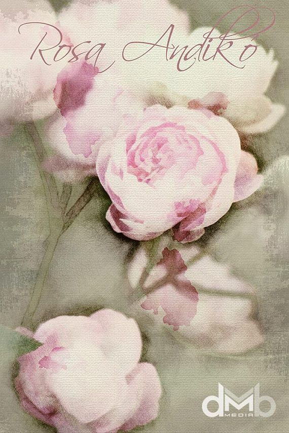 Rosa Andikó  Digital Download Art botanical print floral