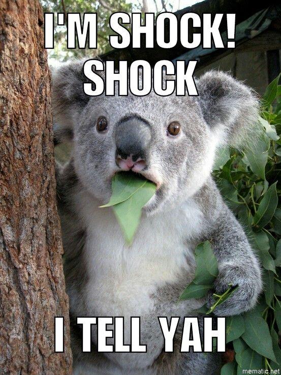 Pin by Brenna Widener on Laughter | Koala meme, Koala bear ...  Funny Koala Memes