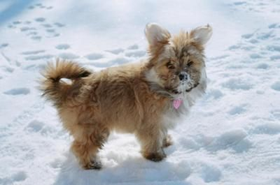 Lilly In The Snow D Lilly My Maltese Pomeranian Mix Is The
