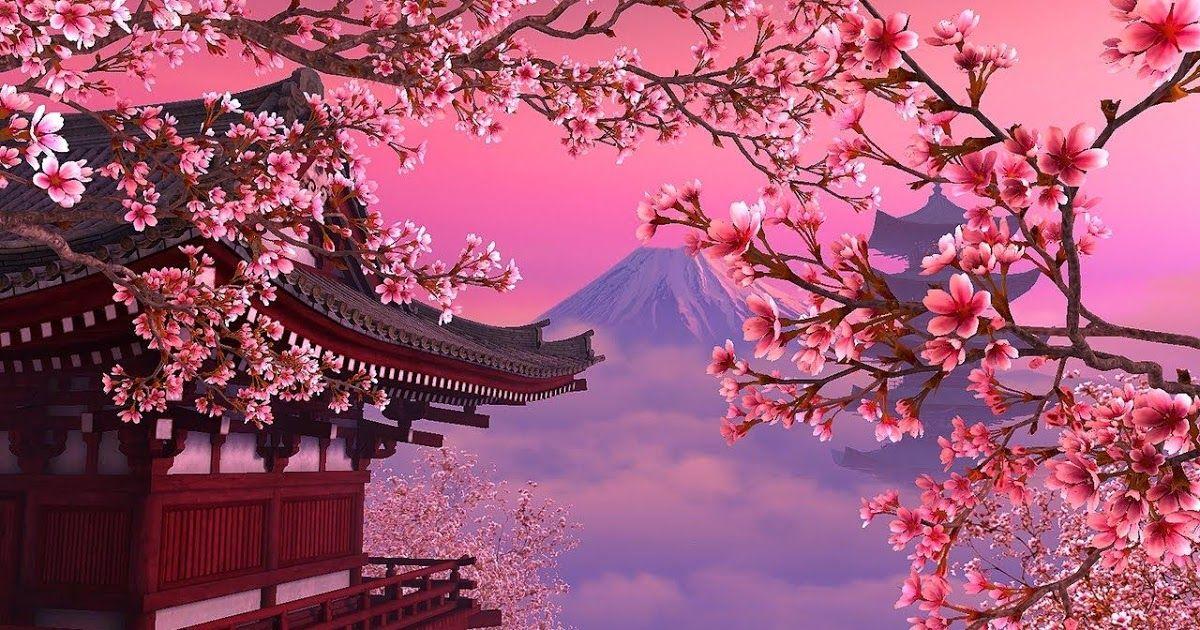 21 1080p Anime Sakura Wallpaper- Download anime sakura ...