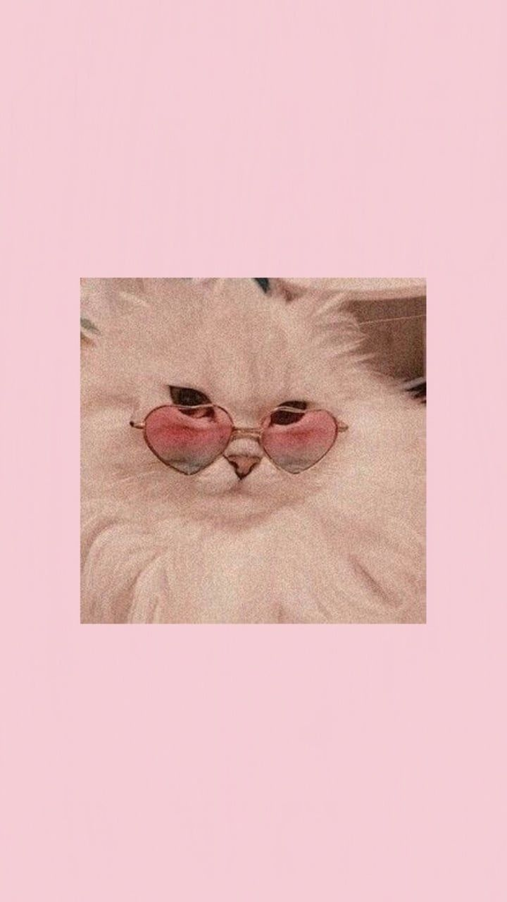 On Twitter In 2020 Pink Wallpaper Backgrounds Aesthetic Iphone Wallpaper Cute Cat Wallpaper