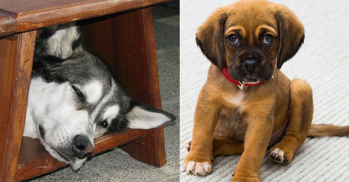 Chances Are, You Don't Know What These Dog Behaviors Mean