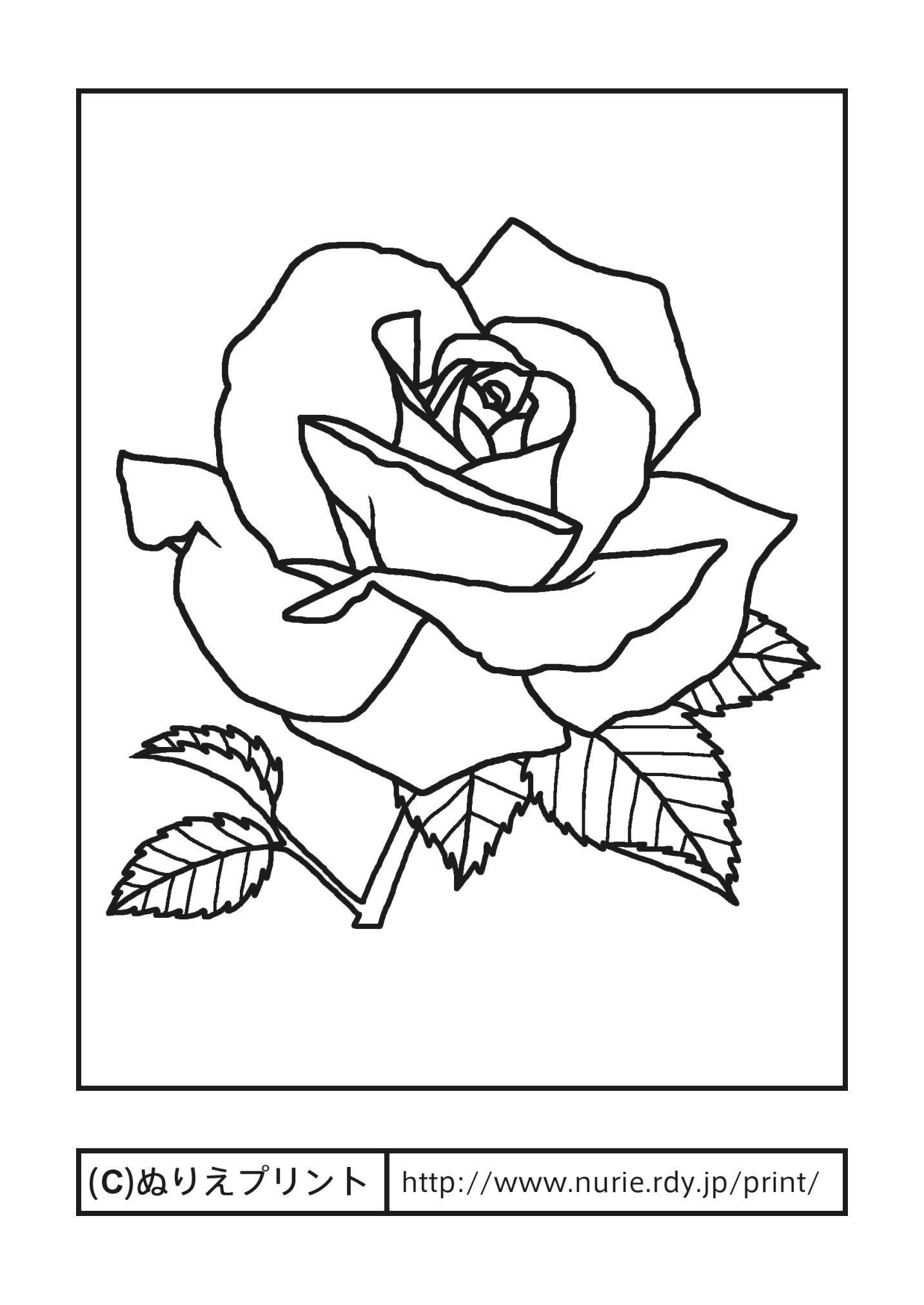 バラ4主線黒花の塗り絵無料イラストぬりえプリント バラ