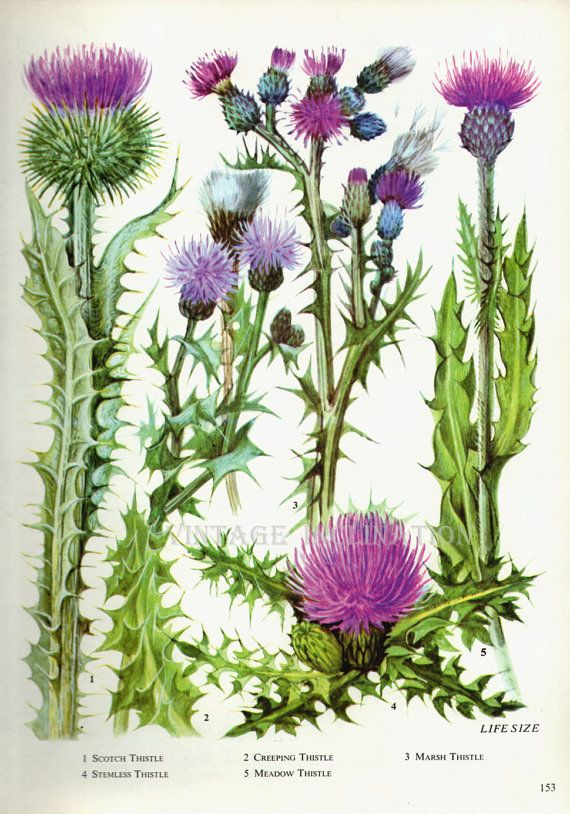 Vintage Botanical Print Antique FLOWERS, plant print botanical print ...