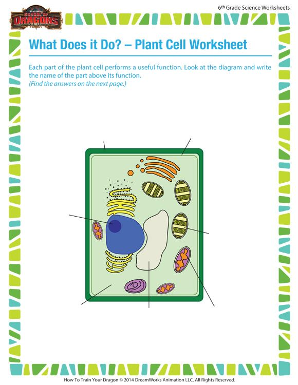 What Does it a Do? - Plant Cell Worksheet - 6th grade ...