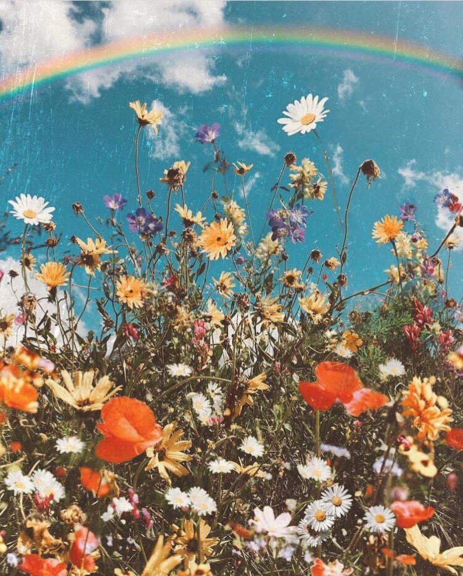 Sezane Sur Instagram Le Temps Des Fleurs Sezane Leprintempssezane Odwyer Sio9 Fond D Ecran Telephone Fond D Ecran Colore Les Arts