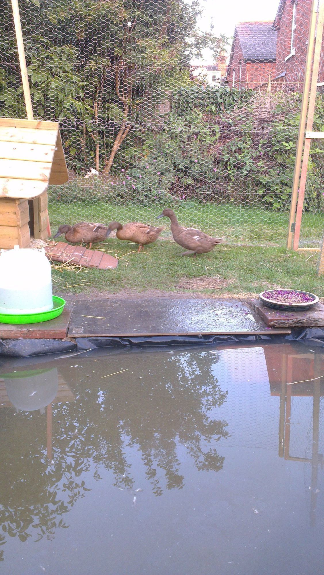 Any ideas how to keep duck ponds clean without major costs
