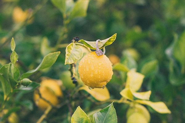 Romantic Lemon Grove Engagement Session | Alexandra Wallace Photography | See more: http://heyweddinglady.com/sweet-lemon-grove-engagement-session-alexandra-wallace-photography/