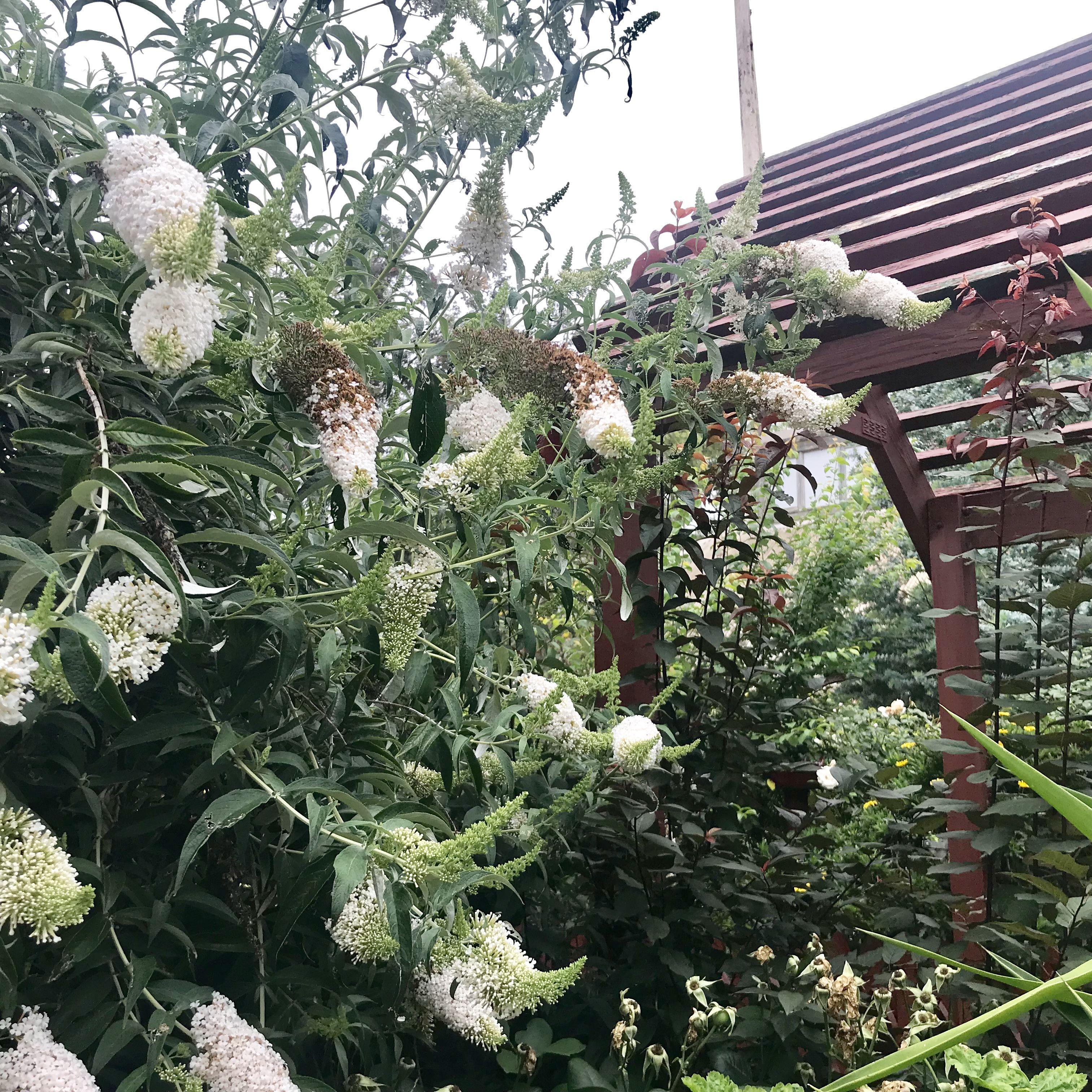 Bacchus Marsh Primary School Gardens Beautiful Garden Ideas Diy Cheap Garden Ideas Cheap School Garden