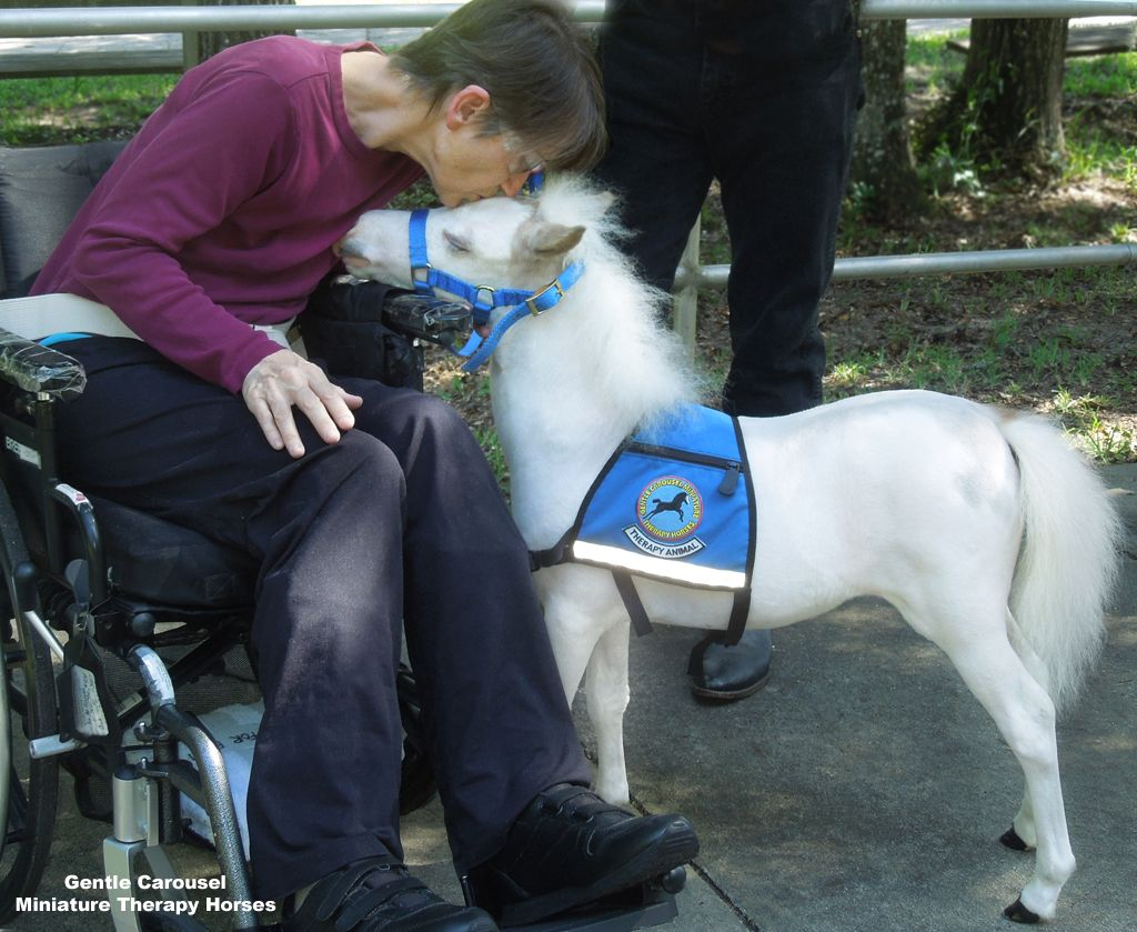 Adorable Miniature Horses Provide Those In Need With Love And Care - Adorable miniature horses provide those in need with love and care