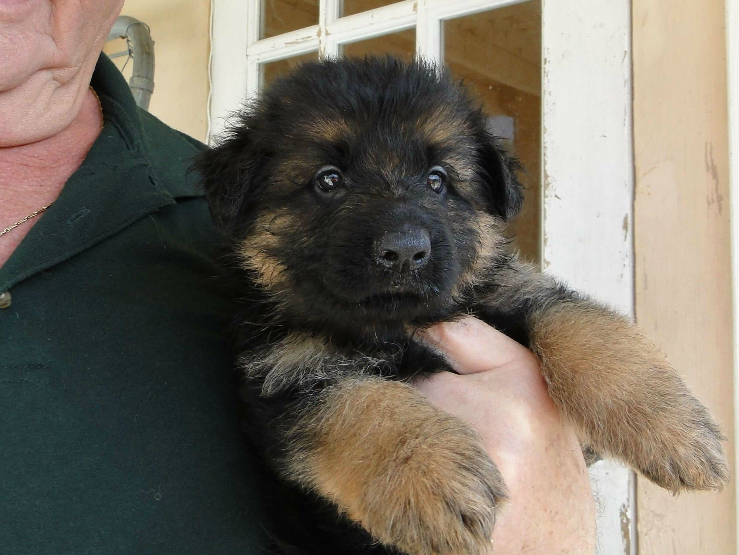We Make It Easy And Simple To Find The Puppy You Ve Always Wanted Our Puppies Are Bred Here In Florida But Are Rottweiler German Rottweiler Puppies Puppies