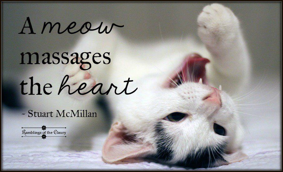 Afbeeldingsresultaat voor a meow massages the heart