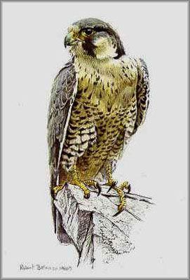 Robert Bateman Peregrine Falcon With Images Wildlife Art