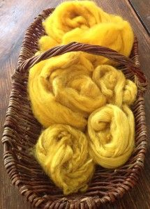 yellow wool from Dyer's chamomile