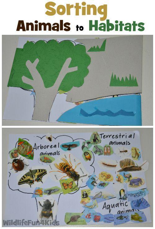 sorting animals to habitats wildlife fun 4 kids unit ideas habitats pinterest. Black Bedroom Furniture Sets. Home Design Ideas