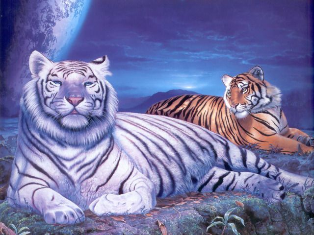 Tigers Wallpaper 3d 2 Tiger Pictures Tiger Wallpaper Animals Beautiful
