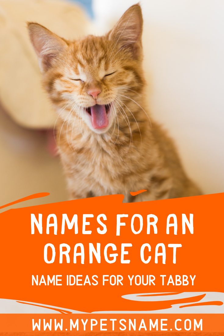 There Are All Kinds Of Names For An Orange Cat Whether You Are Looking For Something That Reflects Their Color Or Th Tabby Cat Names Cat Names Cute Pet Names