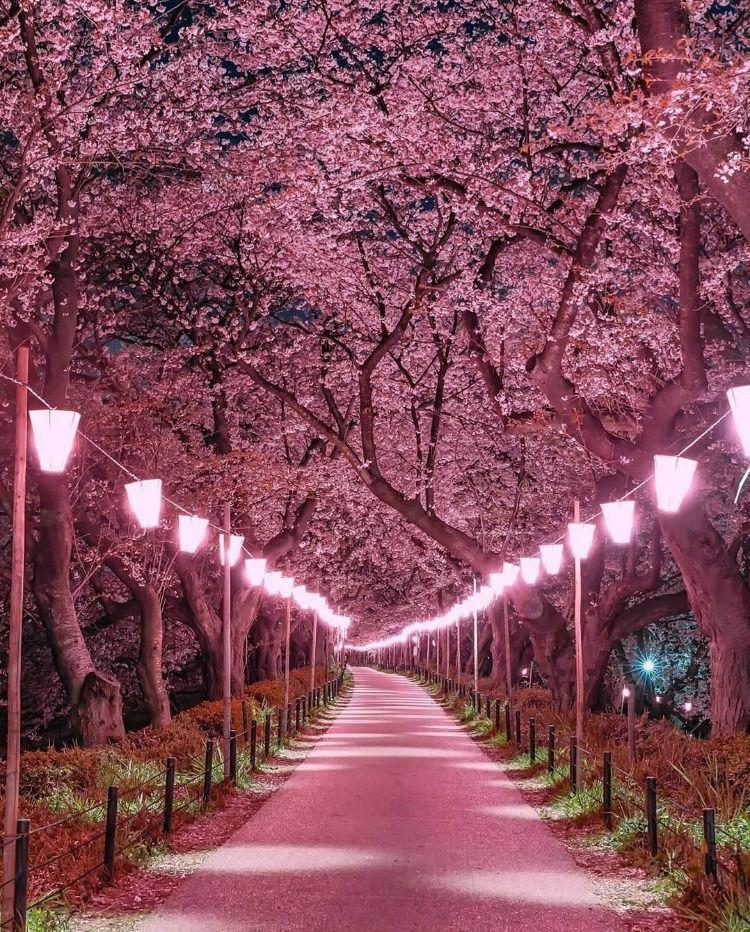 Best Japan Tourist Attractions For Japan Tours Cherry Blossom Japan Japan Tourist Aesthetic Japan