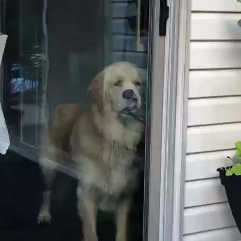 Doggo.exe has stopped responding