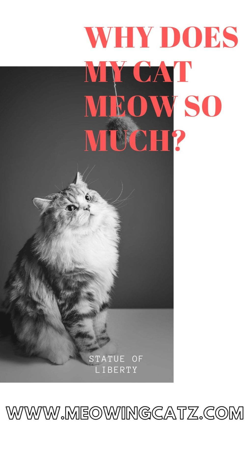 Why does my cat meow so much? Cats, Raising kittens, Cat