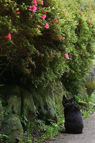 Cloudy Yokohama Azalea Cat Cats Kinds Of Cats Animals