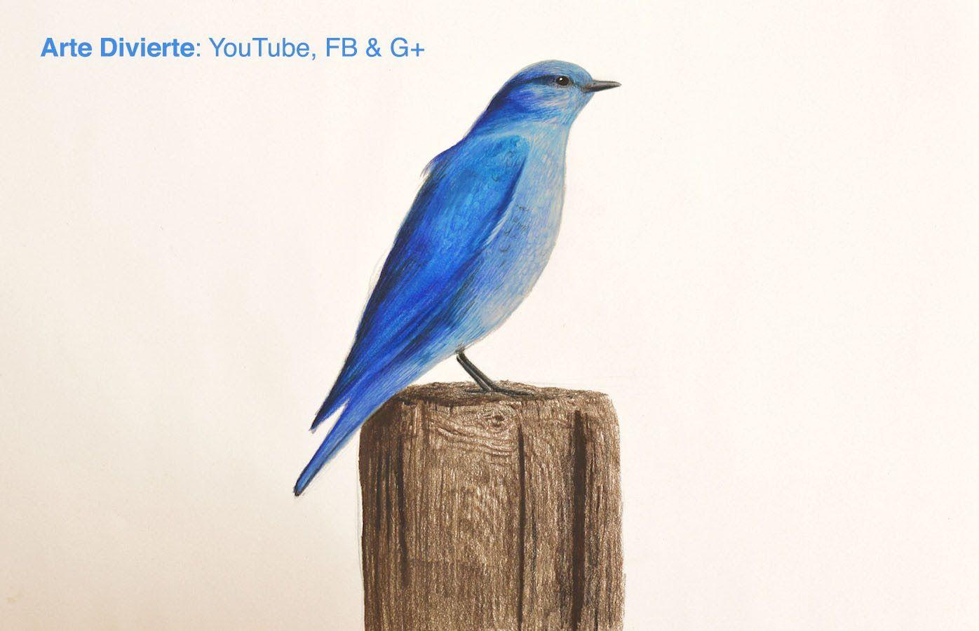 Cmo dibujar un pjaro azul con lpices de colores  El cuento del