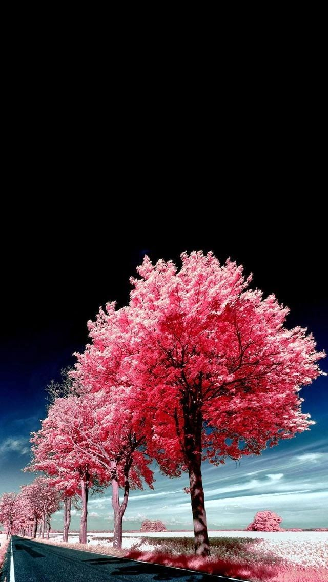 Tap And Get The Free App Nature Landscapes Trees Pink Black Unusual Beautiful Amazing Hd Iphone 5 Wallpaper Pink Trees Tree Wallpaper Iphone Tree Wallpaper