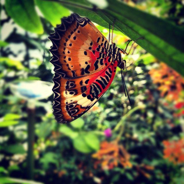 Butterfly Garden, Museum Of Science, Boston