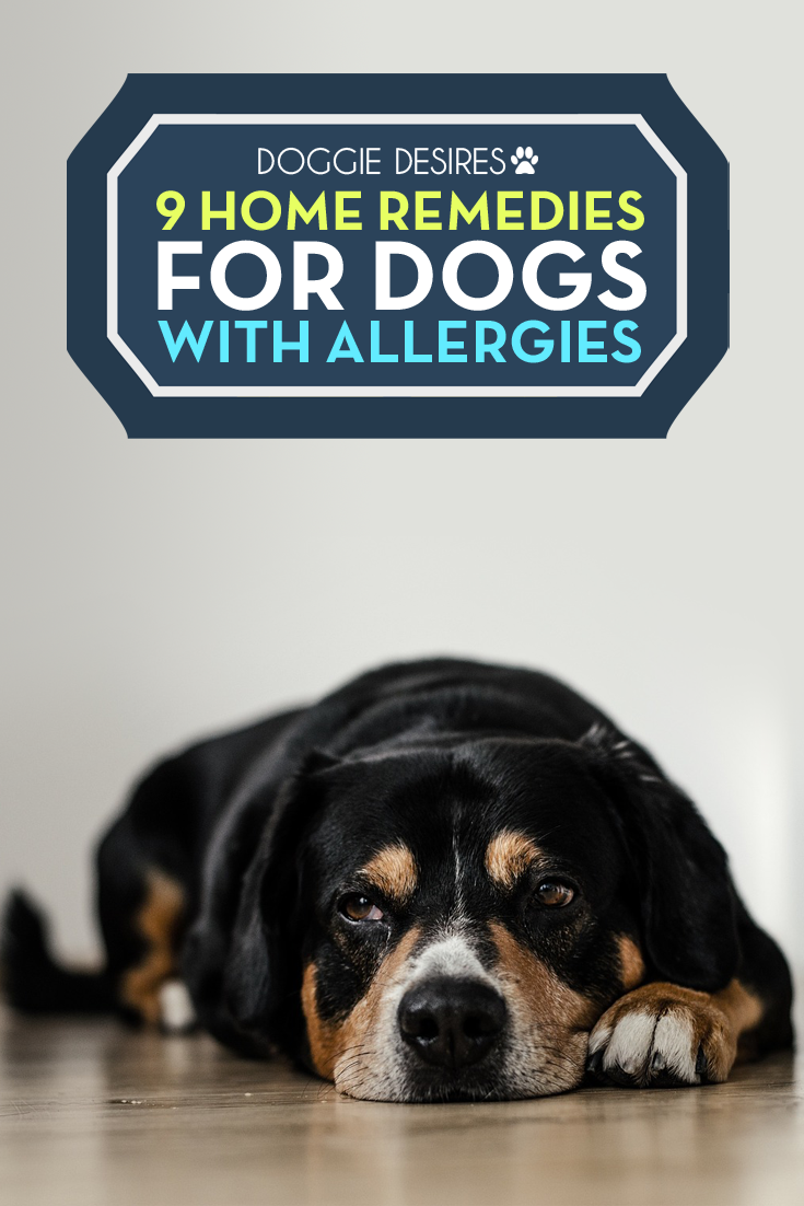 home remedies for dog allergies itching