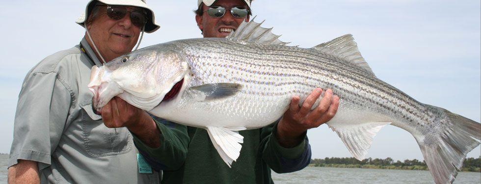 GoAltaCA | Striper Fishing in Northern California