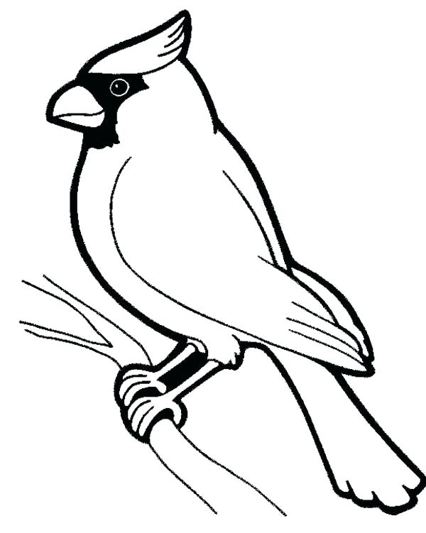 Cardinal Coloring Pages Two Red Cardinals Coloring Page Coloring St Louis Cardinals Coloring Sheets Bird Outline Bird Coloring Pages Black And White Birds