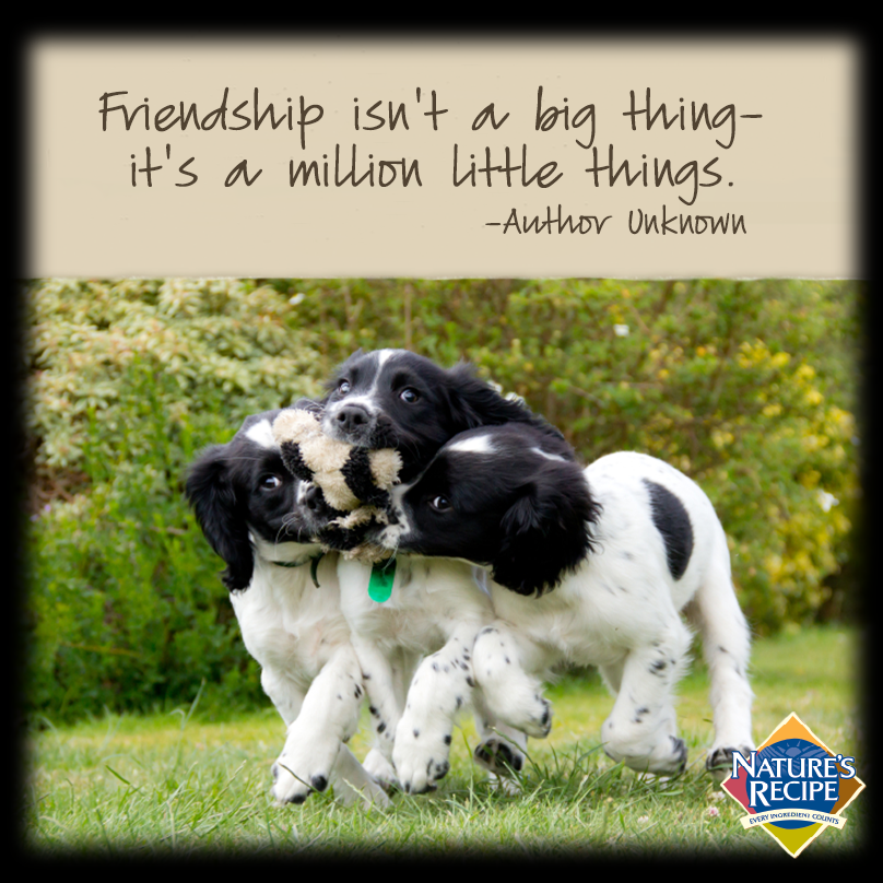 Friendship Isn T A Big Thing It S A Million Little Things Quote Friends Dog Pet Cool Pets I Love Dogs Best Friend Quotes