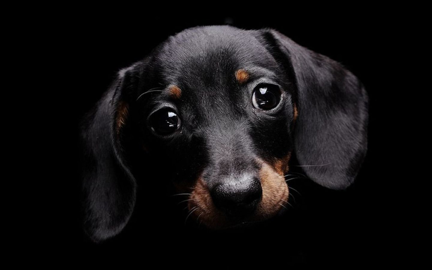 Black Dog HD Wallpapers