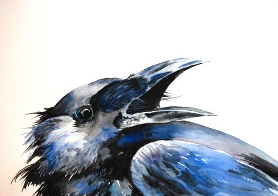 Original watercolor painting of a crow crying out. Beautiful shades of black, grey and blue make this a handsome bird. The clean white background