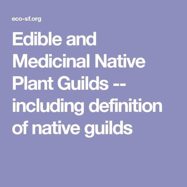 Edible And Medicinal Native Plant Guilds    Including Definition Of Native  Guilds