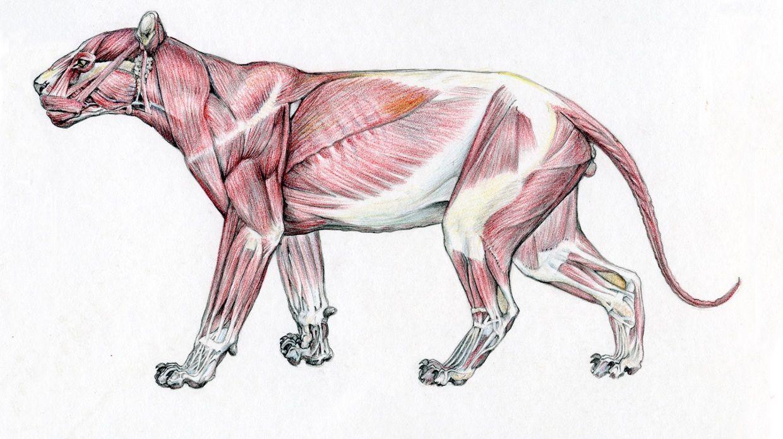 Pin von Ng Kai Xiang auf Animal Anatomy | Pinterest
